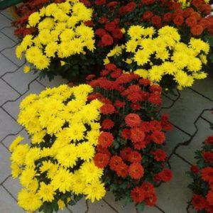 Kwiaty - centrum ogrodnicze pod Białymstokiem